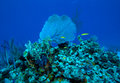 Coral Reef Near Cayo Largo, Cuba Royalty Free Stock Images - 26512679