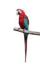Colorful Parrot Saying. Royalty Free Stock Photo - 26514045