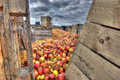 Rotting Apples And Crates Royalty Free Stock Photography - 26523737