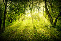 Fantasy Deep Forest Stock Photography - 26524772