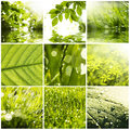Collage Royalty Free Stock Photo - 26542275