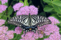 Butterfly Stock Images - 26556134