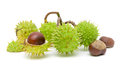 Seven Mature Chestnuts On A White Background Royalty Free Stock Image - 26590026