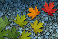 Autumn Leaves On Water Stock Image - 26592281