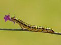 Caterpillar Royalty Free Stock Photo - 26608465
