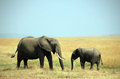Elephant Mother And Calf Royalty Free Stock Image - 26638176
