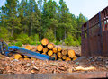 Pine Tree Felled For Timber Industry In Tenerife Royalty Free Stock Photos - 26645438