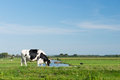 Black And White Cow Stock Photo - 26646740