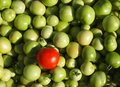 Tomatoes Stock Images - 26657534