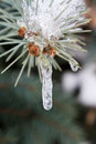 Frozen Sprig Royalty Free Stock Images - 26661059