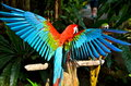 Colorful Parrot Stock Photos - 26690553