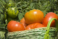 Basket Of Tomatoes In The Garden Royalty Free Stock Images - 26698949