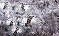 Mirror Christmas Balls On Silver Royalty Free Stock Photo - 26713015
