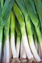 Fresh Healthy Bio Leek On Farmer Market Stock Image - 26720571