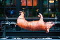 Slow Roasted Pig Stock Images - 26741384
