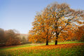 Autumn In Park Royalty Free Stock Photography - 26766157