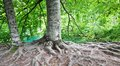 Tree Roots Stock Images - 26776464