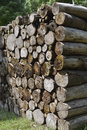 Wood Pile Royalty Free Stock Photography - 26799027