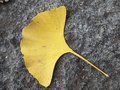 The Yellow Ginkgo Leaf On The Granite Paving Royalty Free Stock Images - 26825089