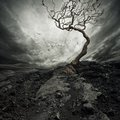Old Dry Tree Royalty Free Stock Photo - 26829575