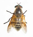 Bee Royalty Free Stock Image - 26834926