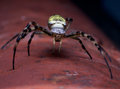 Wasp Spider Royalty Free Stock Photos - 26838898