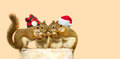 Christmas Squirrels. Royalty Free Stock Image - 26861776