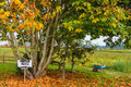 Pumpkin Patch And Wheelbarrow Stock Photography - 26865042
