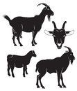 Goat Stock Images - 26884854