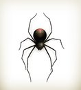 Spider Royalty Free Stock Image - 26886386