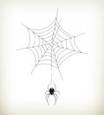 Spider And Web Royalty Free Stock Images - 26886389