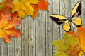 Leaf Autumn Maple And Butterfly Stock Photos - 26924473