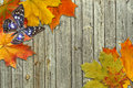Leaf Autumn Maple And Butterfly Stock Photography - 26924492