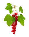 Red Currant Royalty Free Stock Image - 26925006