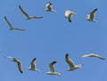 Seagulls Flying Stock Photography - 26935912