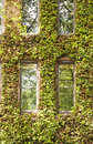 Windows In Vine Covered Building Stock Image - 26946401