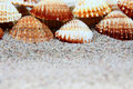 Shell Royalty Free Stock Images - 2701569