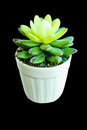 False Cactus Plant Made By Rubber Tree Stock Photography - 27014312