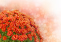 Bouquet Of Autumn Flowers Royalty Free Stock Images - 27021799