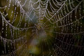 Spider Web  Royalty Free Stock Photo - 27026385
