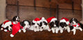 Eight Christmas Puppies Royalty Free Stock Images - 27029009