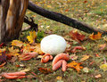 Autumn Harvest Royalty Free Stock Images - 27030469