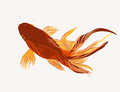 Fishes Royalty Free Stock Images - 27035349