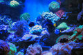 Aquarium Royalty Free Stock Image - 27069466