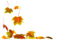 Falling Leaves Royalty Free Stock Photo - 27076525