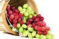 Red And Green Thompson Seedless Grapes Royalty Free Stock Images - 27083079