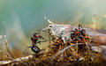 Insects In The Nature Stock Photo - 27095080