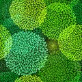 Green Repetitive Pattern Royalty Free Stock Photo - 27101325