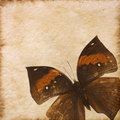 Old Grunge Butterfly Paper Texture Stock Photos - 27117603