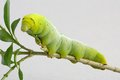 Green Worm Stock Images - 27142664